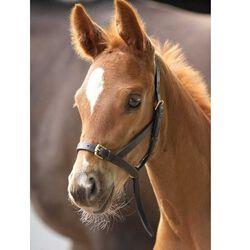 Shires Blenheim Leather Foal Slip Halter