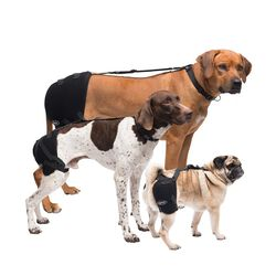 Caldera Hip Therapy Wrap with Gel Packs for Dogs
