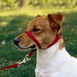 PetSafe Gentle Leader Head Collar