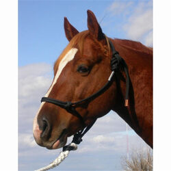 Double Diamond 9.5mm Nylon Rope Halter Horse
