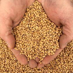 New Country Organics Whole Wheat 50lb Bag