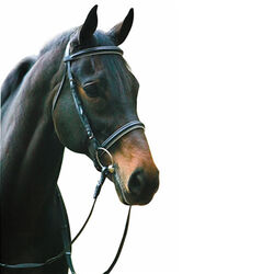 HDR Dressage Bridle With Web Reins