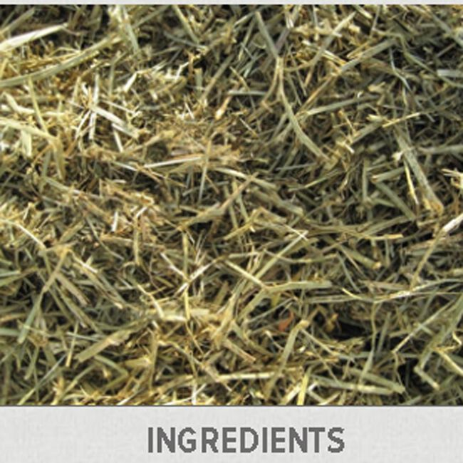 Triple Crown Grass Forage image number null