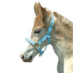 Intrepid Foal Halter