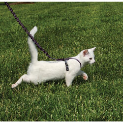 PetSafe Come With Me Kitty Harness & Bungee Leash