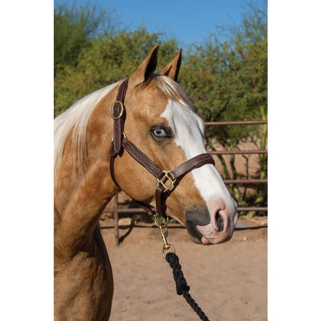 Professional's Choice Leather Halter - Havana image number null