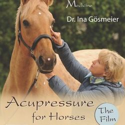 Acupressure for Horses: Basics, Types of Horses, Practical Uses